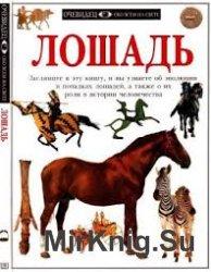 Лошадь (Очевидец. Обо всём на свете)
