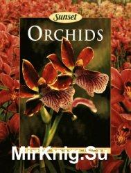Orchids (1998)