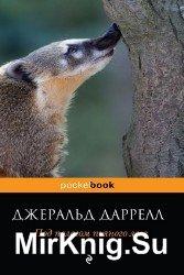 Под пологом пьяного леса (Аудиокнига), читает Мозговой Л.