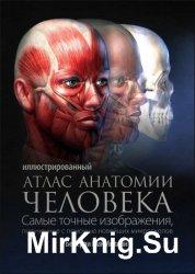 Иллюстрированный атлас анатомии человека