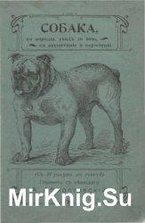 Собака, ее породы, уход за нею, воспитание и содержание
