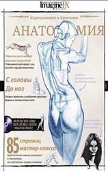 Как рисовать анатомию