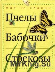 Пчелы. Бабочки. Стрекозы