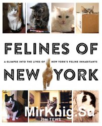 Felines of New York