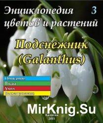 Энциклопедия цветов и растений № 3 (2015) Подснежник