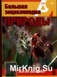 Большая энциклопедия природы. Жизнь растений. Том 6