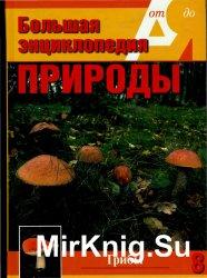 Большая энциклопедия природы. Грибы. Том 8