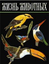 Жизнь животных: Птицы