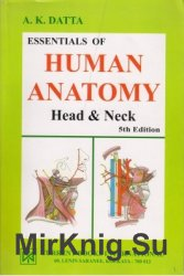Essentials of Human Anatomy. Head and Neck