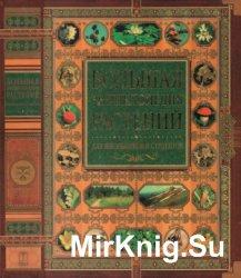 Большая энциклопедия растений для школьников и студентов