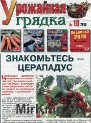 Урожайная грядка № 10, 2016