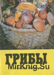 Грибы: в помощь грибникам