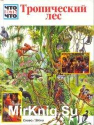 Тропический лес. Что есть что