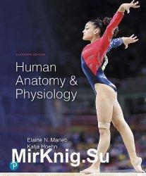 Human Anatomy & Physiology, Eleventh Edition